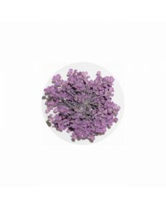 MATIERE Dried Flower Purple 0.2g